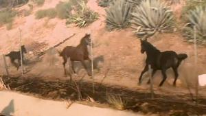 Horse Gallops Into Burning Stable to Rescue Other Horses in Fire