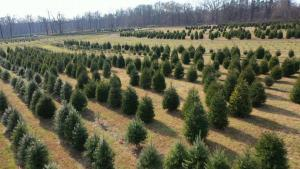 Why You Might Be Paying More for a Christmas Tree This Year