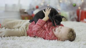 How Can You Keep Your Cat or Dog Safe During the Winter Holidays?