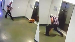 Neighbor Rescues Dog as Elevator Doors Shut on Leash