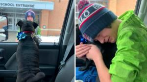 14-Year-Old Gets Surprise of a Lifetime When Lost Dog Is Brought Back Home