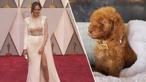Animal Rescue Org Accused of Giving Preferential Treatment to Celeb Adopters
