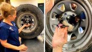Firefighters Free Puppy That Got Head Stuck in Spare Tire