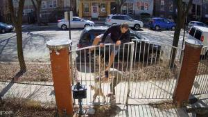 Chicago Runner Scales Fence When Pit Bull Attacks