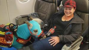 Meet the Emotional Support Miniature Horse That Travels By Plane With Its Owner