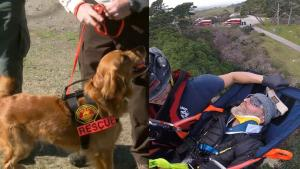 Hero Golden Retriever Rescues Couple Eight Days After Getting Lost During Hike
