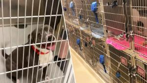 Every Pet at Wisconsin Animal Shelter Goes to Loving Home Before State Lockdown