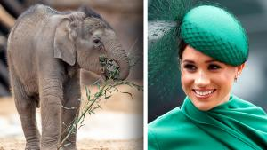 Meghan Markle Returns to Hollywood By Narrating 'Elephant' Documentary