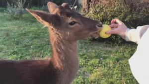 This Deer Adopted an Italian Family Under Quarantine