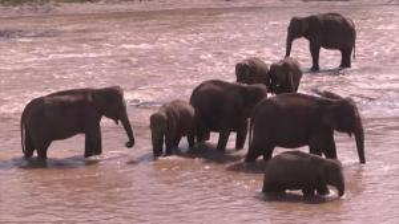What's Killing Elephants in Botswana? Mystery as More Than 300 Dead So Far