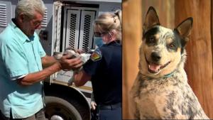 Dog and Man Have Heartwarming Reunion After Southern California Fire Rescue