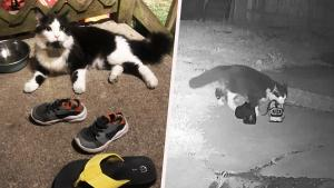 This Cat Burglar Loves Stealing Its Neighbors' Shoes