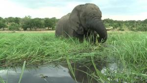 Climate Change and Neurotoxin Killed 300 Elephants in Botswana: Officials