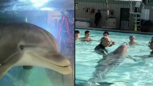How These Robotic Dolphins Could One Day End Animal Captivity