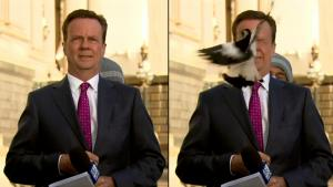 Reporter Shocked When Bird Hits Him in Face Seconds Before Going Live