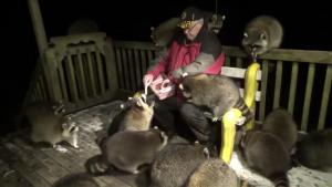 This Man Has Been Feeding Hundreds of Raccoons for the Last 20 Years