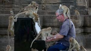 Pianist Michael Barton Plays for Audience of Monkeys in Thailand