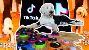 How TikTok's Bunny the Talking Dog Is Teaching Us How to Chat With Our Pets
