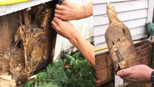 Couple Finds Bootlegger's Whiskey Stash While Renovating New York House