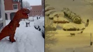 Man Gets Pulled by 5 Dog Sleigh in Spain Snowstorm
