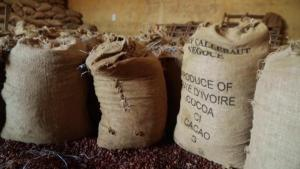 Chocolate Consumption Is Down Causing Cocoa Farmers in Africa to Struggle