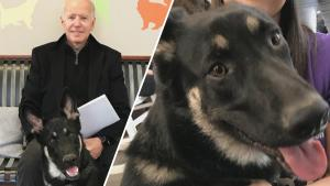 Major Biden Gets 'InDOGuration' Ceremony to Celebrate 1st White House Rescue Dog