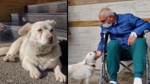 Loyal Canine Waits Outside Hospital for Owner in Turkey