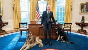 Bidens' German Shepherds Get Sent Back to Delaware After 'Aggressive Behavior'