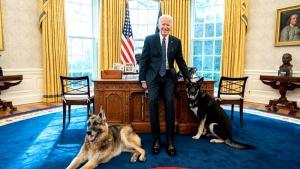 Biden's German Shepherd Major Sent Back to the First Dog House for Retraining