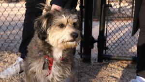 Inside edition, inside_edition, ie animal kingdom, ie heartwarming, ie newsdesk, dogs, dog reunion, dog adopti