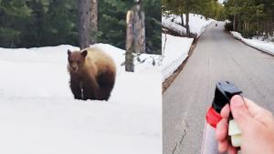 'I'm Not Your Food!' Runner Gets Confronted by Black Bear in National Park