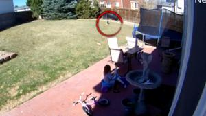 5-Year-Old Girl Stares Down Bobcat in Her Backyard Like an Old Western Movie