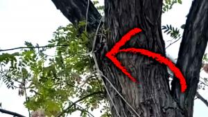 Noose Tied to Backyard Tree of Black Family in Southern California