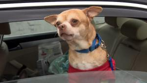 Prancer, the Worst Dog in America, Loves His New Home but Still Hates Reporters