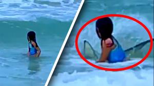 6-Year-Old Girl Gets Bumped by Shark in Shallow Water
