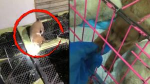 Rescuers Save Scores of Puppies and Kittens From Smugglers in China Warehouse