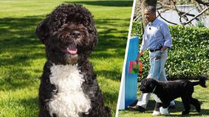 The Obamas Pay Tribute to Their Dog Bo After He Dies From Cancer