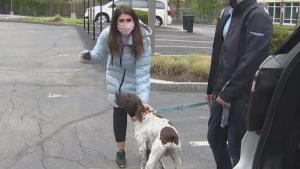 Journalist Reporting on Missing Dog Busts Accused Dognapper on Live TV