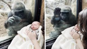 Human and Gorilla Mothers Bond Over Woman's Baby at the Zoo