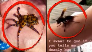 Animal Interactions That Had These People Incredibly Close to Danger