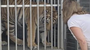 How an Animal Sanctuary Owner Made Sure Tiger Seen on Texas Street Was Turned In