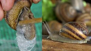 French Artisanal Soapmaker Raises Snails for Their Slime