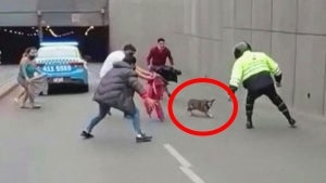 Dog Evades Everyone Trying to Catch Her on a Highway in Peru