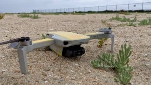 Drones in California Are Scaring Birds and Leading Them to Abandon Their Eggs