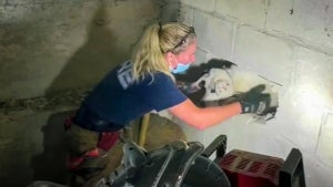 Missing Ohio Dog Rescued From Inside Concrete Wall After 5 Days