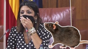 Big Rat Interrupts Andalusian Lawmakers in Spanish City of Seville