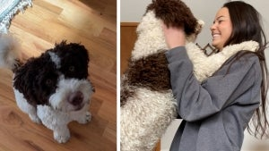 Chicago Woman Believes Dog Sitter Sold Her Dog Online