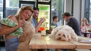 Dogs and Humans Can Share Treats and Drinks at 'After Bark' Dog Bar