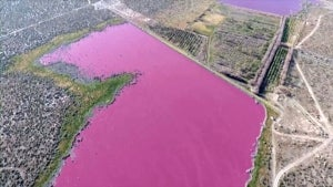 Argentinian Officials Stumped Over What Turned Two Lakes Hot-Pink