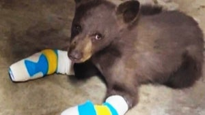 Bear Cub That Burned All 4 Paws in California Wildfire Escapes Rescue Facility